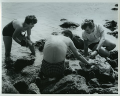 Collecting in Tide Pools, undated (Duke Yearlook) Tags: ocean beach coral nc rocks science research swimsuit tidepools beaufort bathingsuit collecting dukeuniversity specimens marinelaboratory