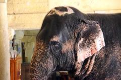 Elefante3 FB