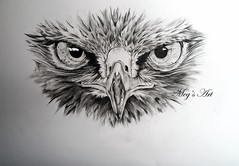 Buzzard Face Drawing (Megan Humphries Artist) Tags: detail bird art illustration real eyes prey buzzard drawn common