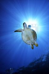 2012 11 METTRA OCEAN INDIEN 4789