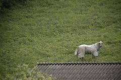 a horse named rambo (stockwerk23) Tags: deleteme5 deleteme8 deleteme deleteme2 deleteme3 deleteme4 deleteme6 deleteme7 saveme saveme2 deletme9