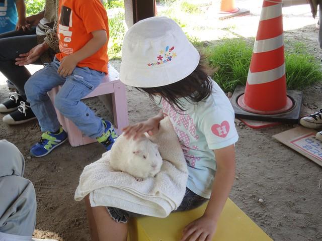 旭山動物園のこども牧場でふれあいタイム 旭川市旭山動物園