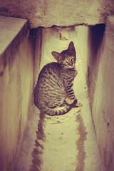 Drain kitten. (Steffi KMX) Tags: kitten magic tabby grunge drain filters straycats nikond7000