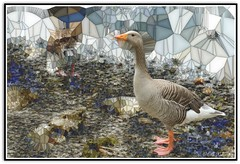 Crystal-gazing Goose ...! (Colink321 - Off indefintely ...) Tags: fun crystal sony goose cumbria multicolour crystallized hss greylaggoose sliderssunday