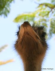 oasispark fuerteventura animals I (ute.mueller) Tags: park islands fuerteventura urlaub oasis canary parc spanien kanarische inseln 2013 oasispark
