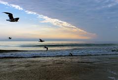 . (emdot) Tags: ocean california sunset cloud bird beach sand pacific gull wave morrobay centralcoast slocounty dogbeach