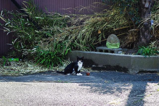 Today's Cat@2013-10-27