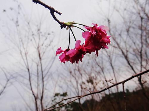 向天湖光天高山 (37).jpg