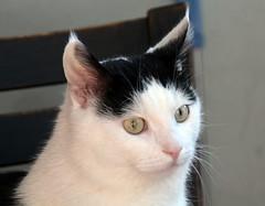 IMG_2205 (dranzah) Tags: cat rip neo