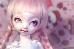 Cupcake Dream (Antygea) Tags: momo pastel bjd dollfie dollpamm