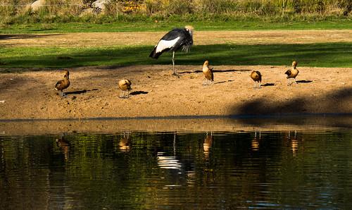 FamilyBird