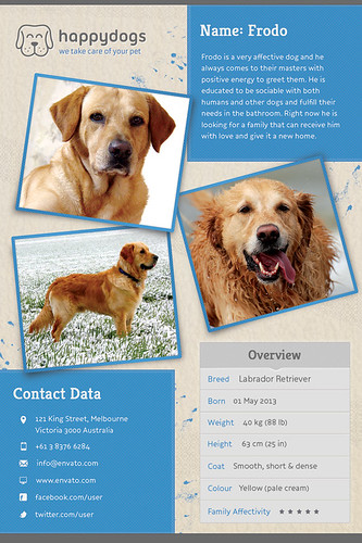 Pet Flyer Gallery Blue Version