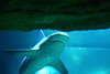 IMG_2916_DPP (PREDATOF) Tags: paris de aquarium cineaqua