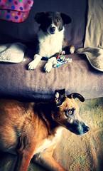 el duo descansa (martirio) Tags: bogot perros