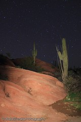 Along Willow Springs Canyon (Crotalusfreak) Tags: life longexposure arizona cactus sky southwest nature night stars landscape fun desert live southwestern desertscape