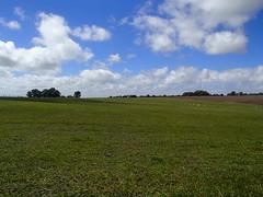 Grazing pasture - Uruguay