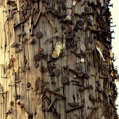 surrey heritage pole (danna  curious tangles) Tags: bc power telephone surrey pole