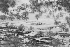 (zhouyousifang) Tags: china winter village  grassland   neimenggu    2013