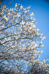 GTJ-20140120-16 (goteamjosh) Tags: mountains taiwan sakura cherryblossoms   taoyuan  plumblossoms  fuhsing