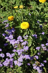 "Flowers at Delano Garden <a style=""margin-left:10px; font-size:0.8em;"" href=""http://www.flickr.com/photos/91915217@N00/12450056465/"" target=""_blank"">@flickr</a>"
