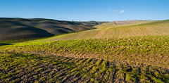 Beautiful Tuscany lands (luigig75) Tags: italy canon italia tuscany usm montalcino pienza toscana valdorcia 70 rollinghills 1022 colline canonefs1022mmf3545usm cipresso sanquiricodorcia 70d senesi