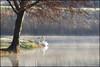 """Un beau p'tit couple (Excalibur67) Tags: trees nature landscape nikon arbres tamron paysages cygne eaux d90 étangs greatphotographers greenscene exoticimage"""" greaterphotographers vigilantphotographersunite vpu2 vpu3 vpu4 vpu5 sp70300divcusd"""