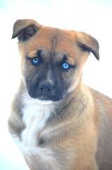 Jaz (JamesPollock3) Tags: love saint pose puppy husky jasmine holy bestfriend epiphany lifepartner