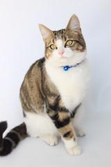 Amber (DisneyPig) Tags: cats animal animals cat tabby kitty lovers kitties tabbycat