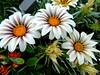 la grande bellezza (stefania.tarantola) Tags: flowers colors italia expo natura fiori petali colori pianta pistillo coltivare expo2015