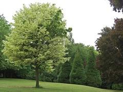 Nottingham Arboretum (Lady Wulfrun) Tags: nottingham trees green july arboretum 16th 2015 nottinghamarboretum