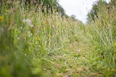 Through the Marsh (oandrews) Tags: england plants plant nature grass outside outdoors track unitedkingdom outdoor path norfolk reserve naturereserve gb grasses marsh moor marshland wetland sedge sculthorpe sedges northnorfolk northnorfolkdistrict