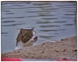 Cat hanting...