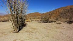 Borrego 08024 (Omar Omar) Tags: hot southwest desert dry desierto anzaborrego arid calor sandiegocounty coloradodesert desertsouthwest imperialcounty caluroso ocotillos hellholecanyon hellholecanyontrail anzaborrgeodesert anzaborrgeodesertstatepark maidenhairfallstrail