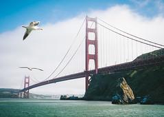 Golden Gate Bridge (Explored #5!) (miemo) Tags: sanfrancisco california travel bridge sea summer usa seagulls birds fog clouds olympus hills goldengatebridge sanfranciscobay horseshoebay omd explored em5 panasonic1235mmf28