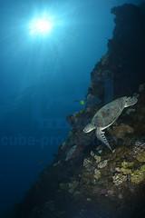 2013 04 METTRA OCEAN INDIEN 0726