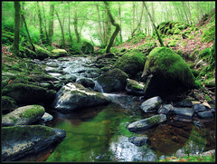 Birnam Glen (eric robb niven) Tags: walking landscape scotland waterfall glen burn dunkeld birnam inchewan canong12 ericrobbniven