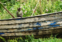 DSC_3885b (meine.augenblicke) Tags: boote balticsea peninsula 2008 katzen ahrenshoop idylle ruderboot halbinsel fischlanddarszingst kameranikond80