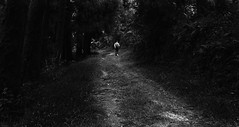 Into The Wild! (Sujoy75) Tags: india darjeeling westbengal nikond90 chatakpur