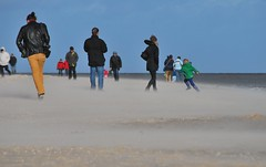 Gales of November (Scilla sinensis) Tags: storm beach sand gales fotosondag fs131103