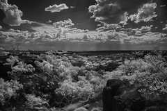 As far as the eye can see. (erglis_m (Mick)) Tags: blackandwhite bw contrast canon landscape ir blackwhite interesting australia canoneos20d infrared australianlandscape wavehill infraredfilter kalkarindji lajamanu kalkarinji kalkaringi