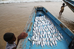 Fish - Puri, India (Maciej Dakowicz) Tags: sea india fish beach children boat fisherman orissa puri odisha