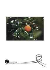 """45. Sergi <a style=""""margin-left:10px; font-size:0.8em;"""" href=""""http://www.flickr.com/photos/110347743@N05/11462584434/"""" target=""""_blank"""">@flickr</a>"""