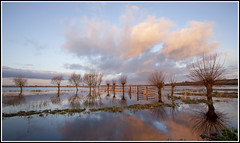 Tealham Moor (CliveDodd) Tags: somerset moor willows levels floods tealham
