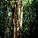 """O Dragão de São Francisco - São Francisco do Sul/SC - 21/01/2014 • <a style=""""font-size:0.8em;"""" href=""""http://www.flickr.com/photos/39546249@N07/12076170213/"""" target=""""_blank"""">View on Flickr</a>"""
