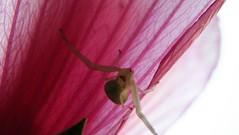 275macro (Hegyaljai Imre) Tags: macro insect makro insekten rovar makr rovarok hegyaljaii
