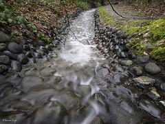 feeding into (Shannon Leigh Photography) Tags: nature burnaby ravine kaymar shannonleighphotography