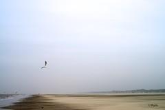 Emptiness (Kym.) Tags: sea sky bird beach terschelling walking island walk empty seagull gull dune thenetherlands stroll emptiness