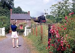 The Lady Photographer. Hampton Loade (SVR). August 1971 (ricsrailpics) Tags: uk 1971 shropshire svr severnvalleyrailway hamptonloade approachingtrain