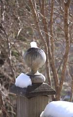 6/52/14 Snow cap (Hodgey) Tags: winter snow maine railing lilacbush newelpost 52wtfnd