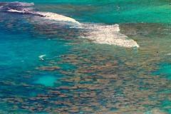 Hanauma Bay Nature Preserve (shapour bahrami) Tags: beach hawaii hanaumabaynaturepreserve